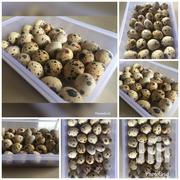 Quail Eggs For Sale | Meals & Drinks for sale in Greater Accra, Ashaiman Municipal