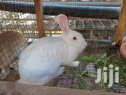 Rabbits For Sale | Livestock & Poultry for sale in Greater Accra, Ga South Municipal
