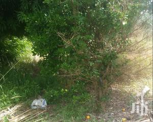 Agricultural Land Close to Town 4sale in Sunyani | Land & Plots For Sale for sale in Brong Ahafo, Sunyani Municipal