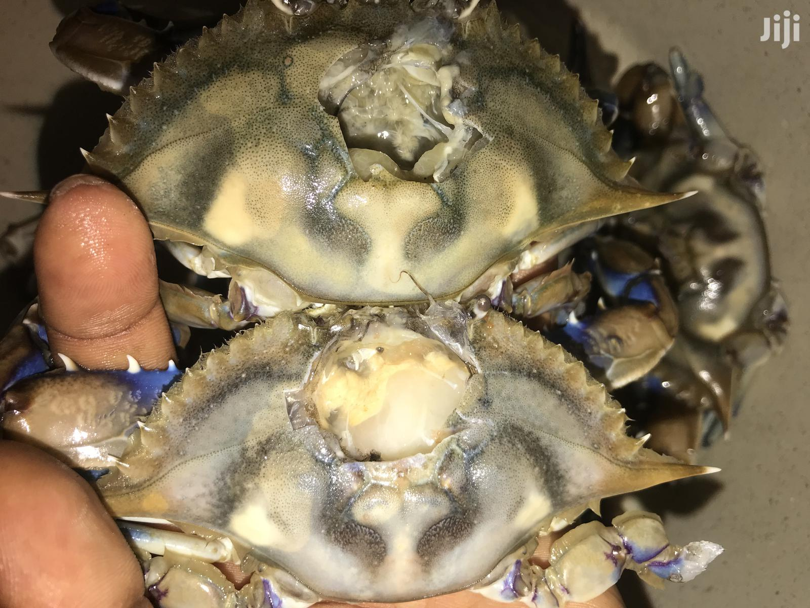 Archive: Fresh Seafoods