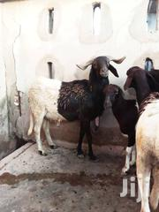 Sheeps For Sale | Livestock & Poultry for sale in Greater Accra, Kwashieman