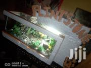 A Waterfall Aquarium | Fish for sale in Greater Accra, East Legon