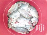 Fresh Tilapia For Sale | Meals & Drinks for sale in Greater Accra, Accra Metropolitan