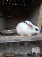 Rabbits For Sale | Livestock & Poultry for sale in Greater Accra, Adenta Municipal