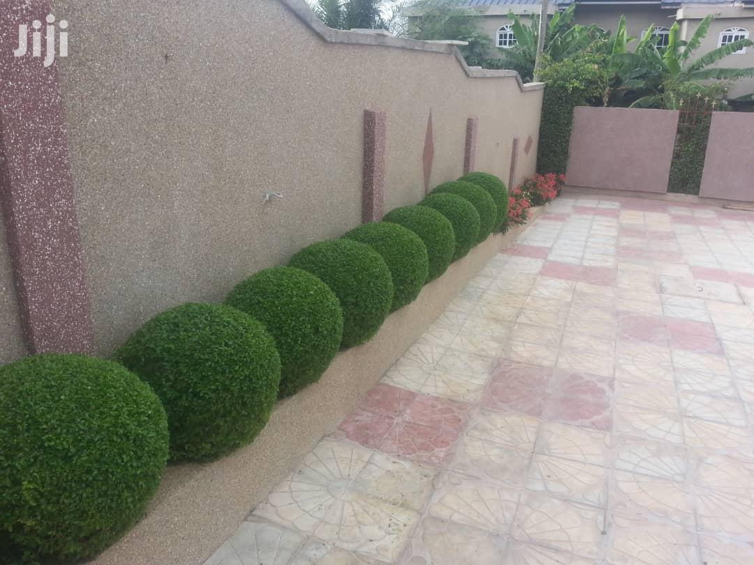 Nhyira Gardens Expert