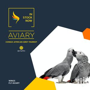 Congo African Grey | Birds for sale in Greater Accra, Achimota