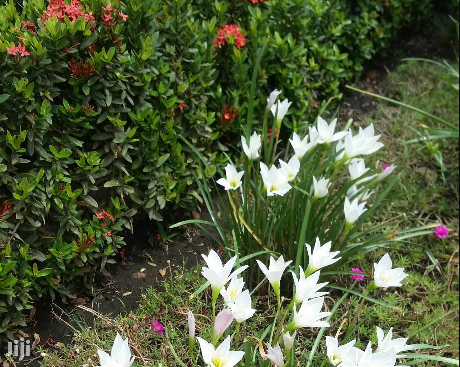Blooming Plants For Sale | Garden for sale in Ga South Municipal, Greater Accra, Ghana
