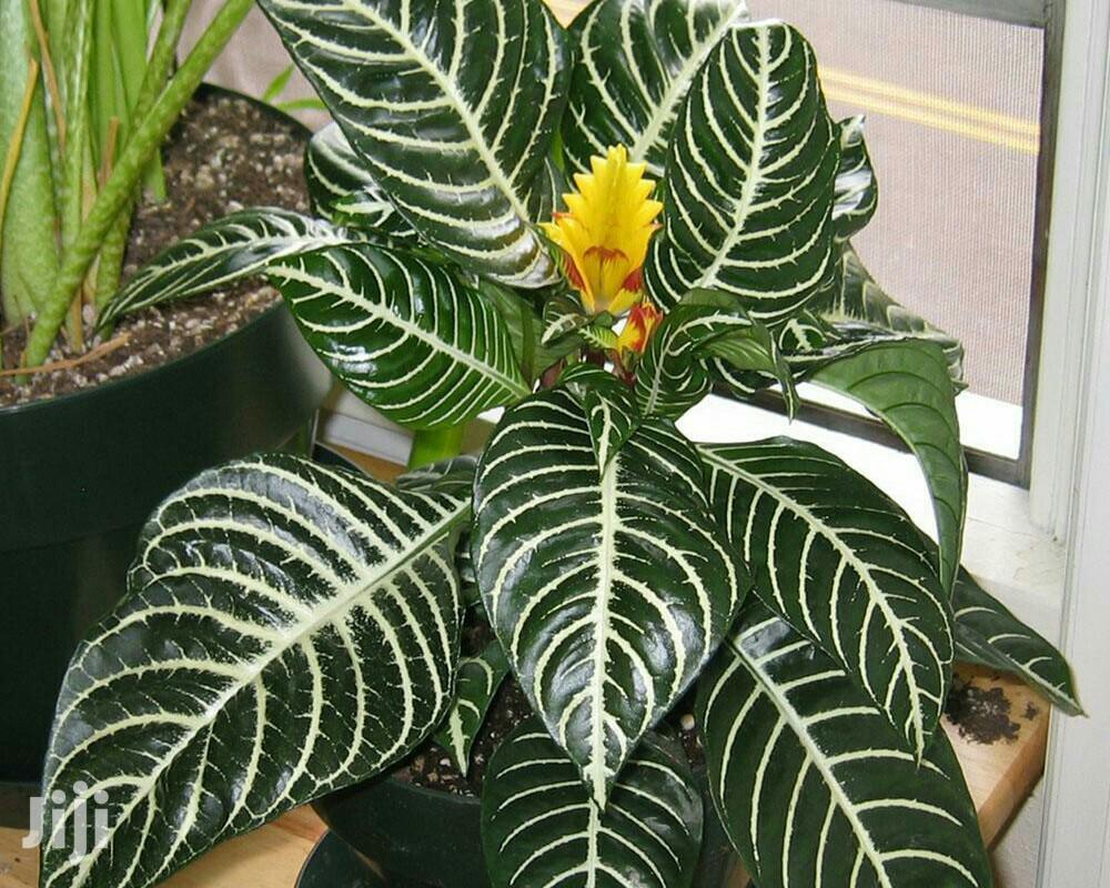 Indoor Resistance Plants For Sale