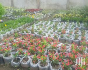 Amazing Flower Plants For Sale