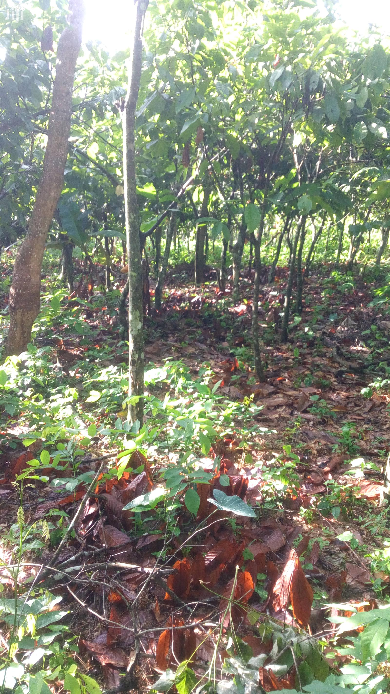 Plot of Land for Sale | Land & Plots For Sale for sale in Suhum/Kraboa/Coaltar, Eastern Region, Ghana