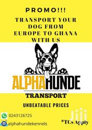 Transport Your Dogs From Europe To Ghana With Us | Dogs & Puppies for sale in Greater Accra, Adenta Municipal