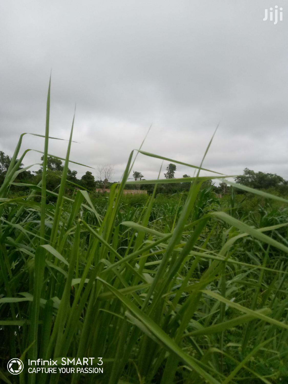Big Farmland For Sale