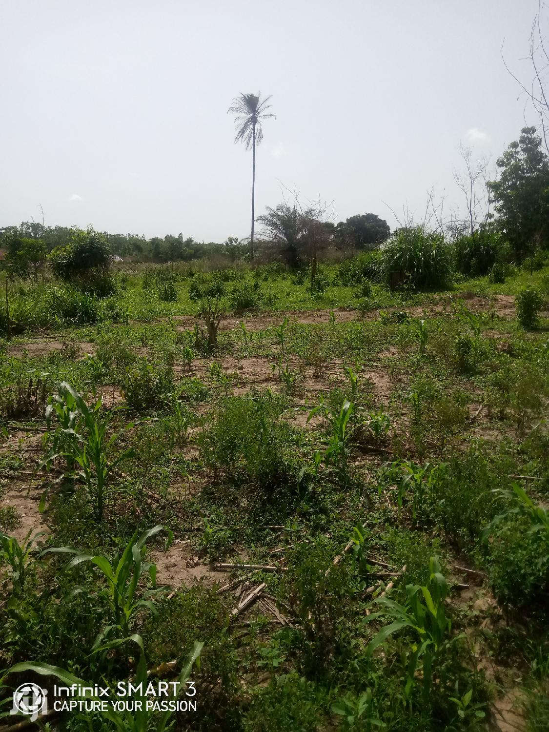 Big Farmland For Sale   Land & Plots For Sale for sale in Tain, Brong Ahafo, Ghana