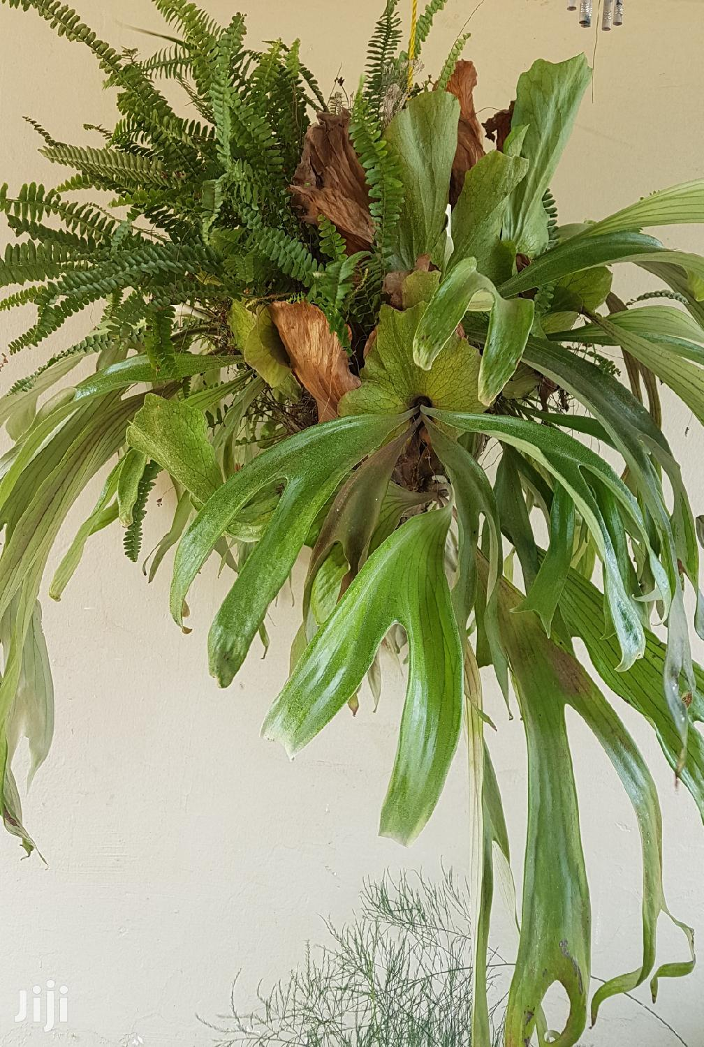 Archive: House Plants And Indoor Plants