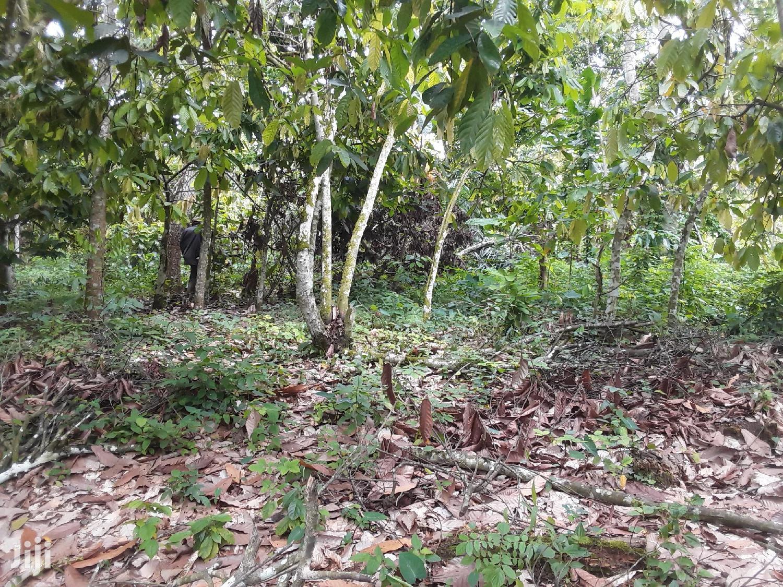 Plot of Land for Sale | Land & Plots For Sale for sale in Suhum/Kraboa/Coaltar, Eastern Region, Ghana