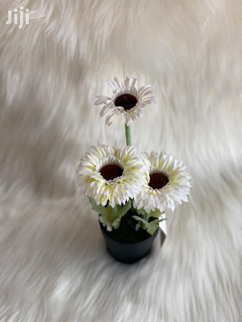 Flowers For Sale | Garden for sale in Tema Metropolitan, Greater Accra, Ghana