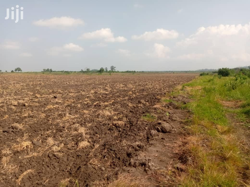 Farmland For Sale At Asutsuarea, Tema Akosombo. 30,000