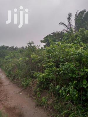 65 Acres of Farm Land at Sale.   Land & Plots For Sale for sale in Ashanti, Ejisu-Juaben Municipal