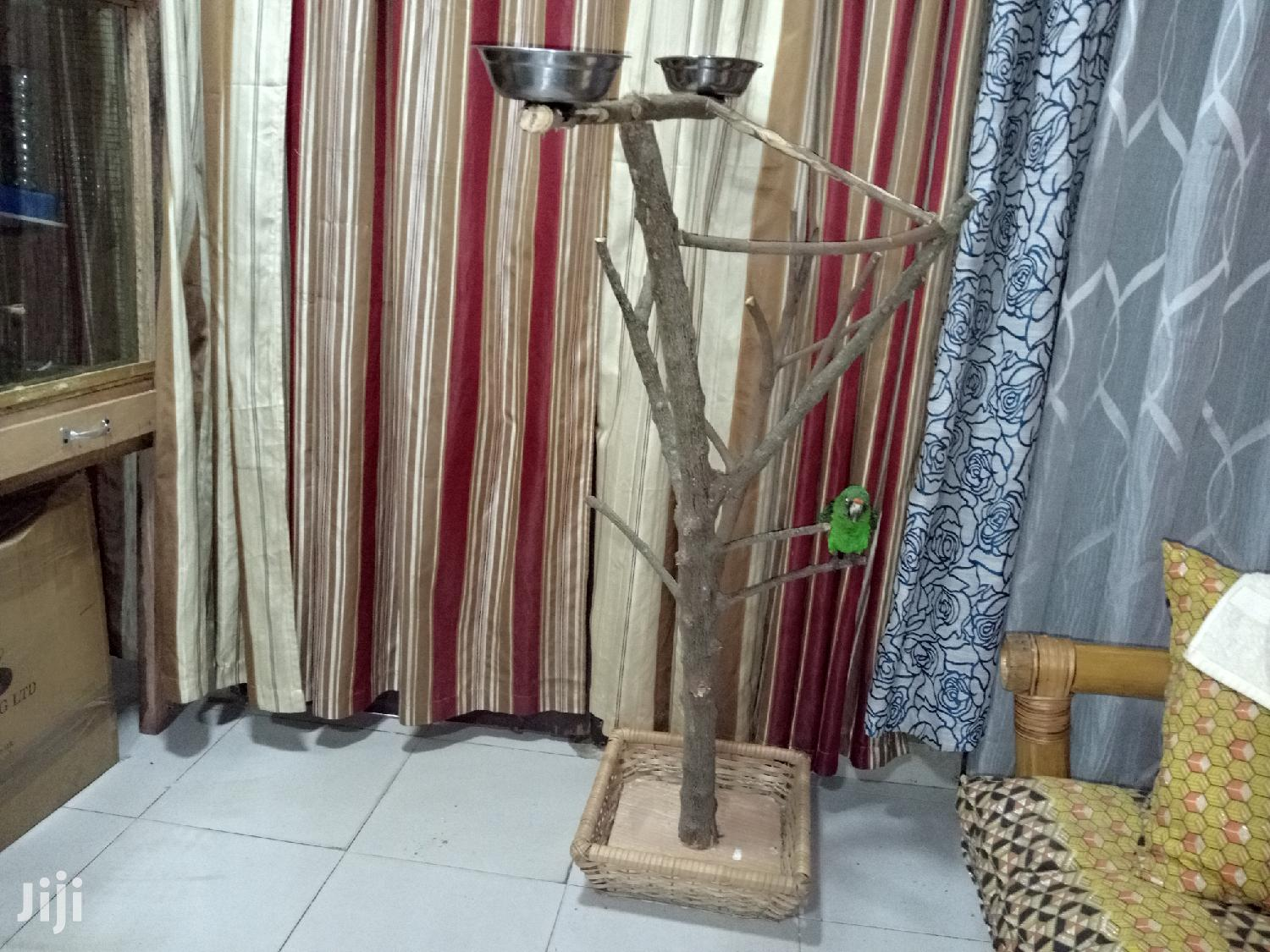 Parrots Perch | Pet's Accessories for sale in Achimota, Greater Accra, Ghana