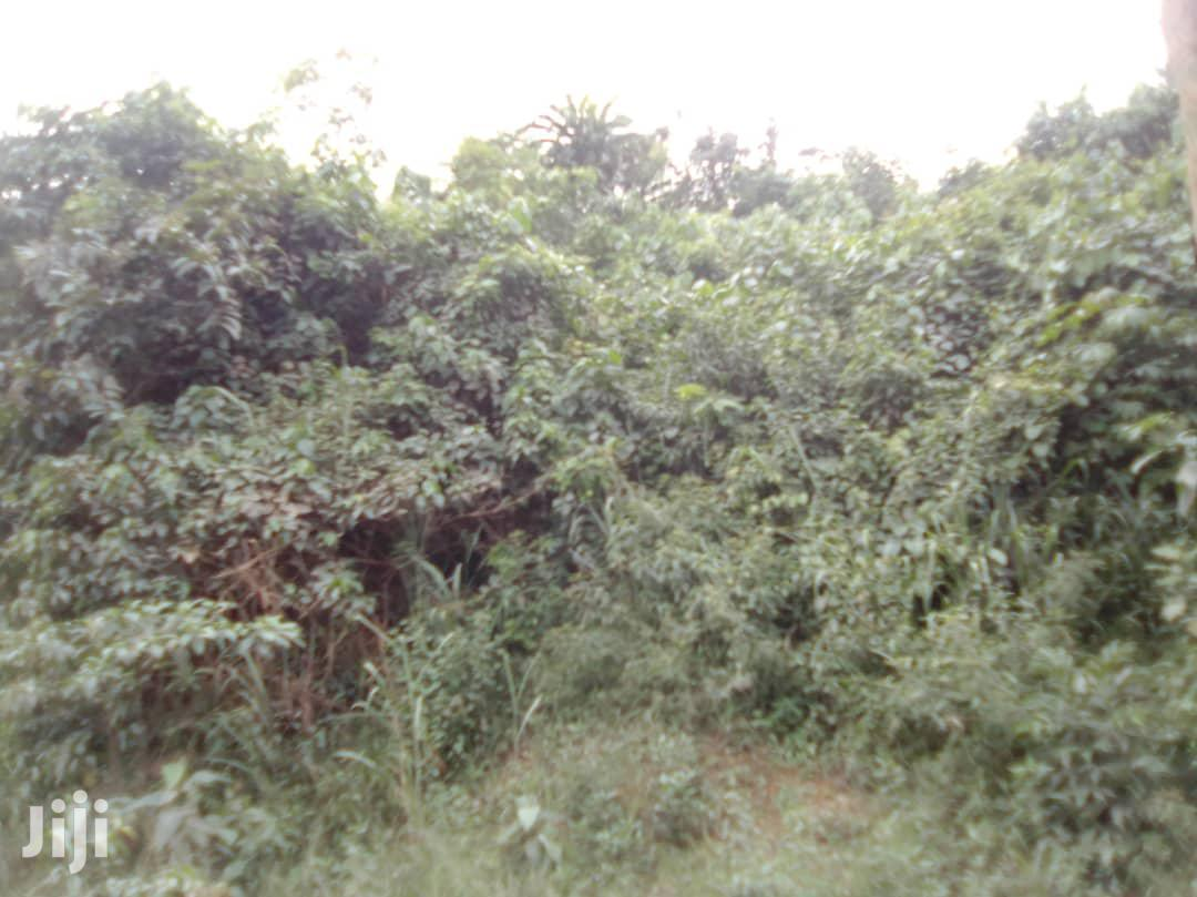 75 Acres Farmland for Sale at Tinkong