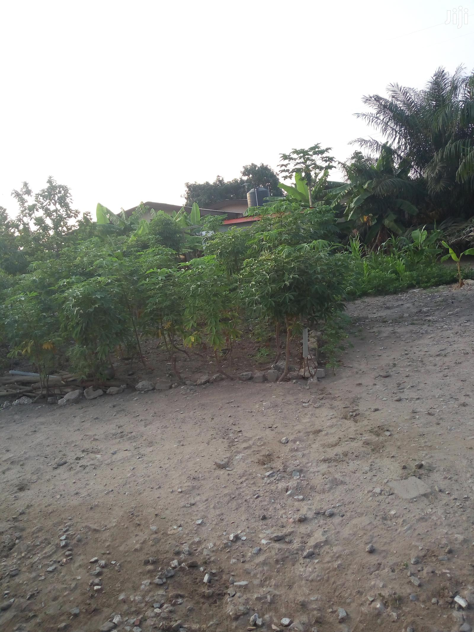 Farm Land For Rice And Other Farm Produce