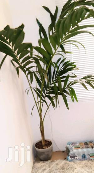 House,Garden And Room Plant