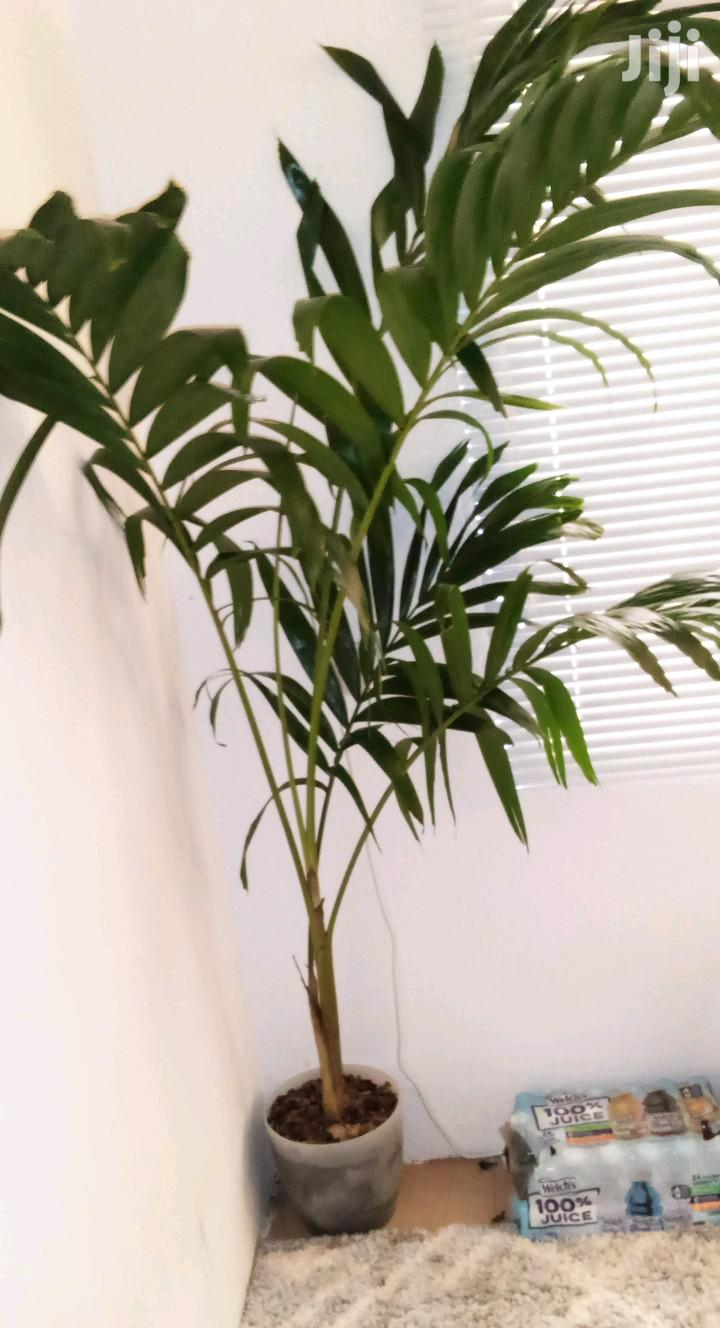 Archive: House,Garden And Room Plant