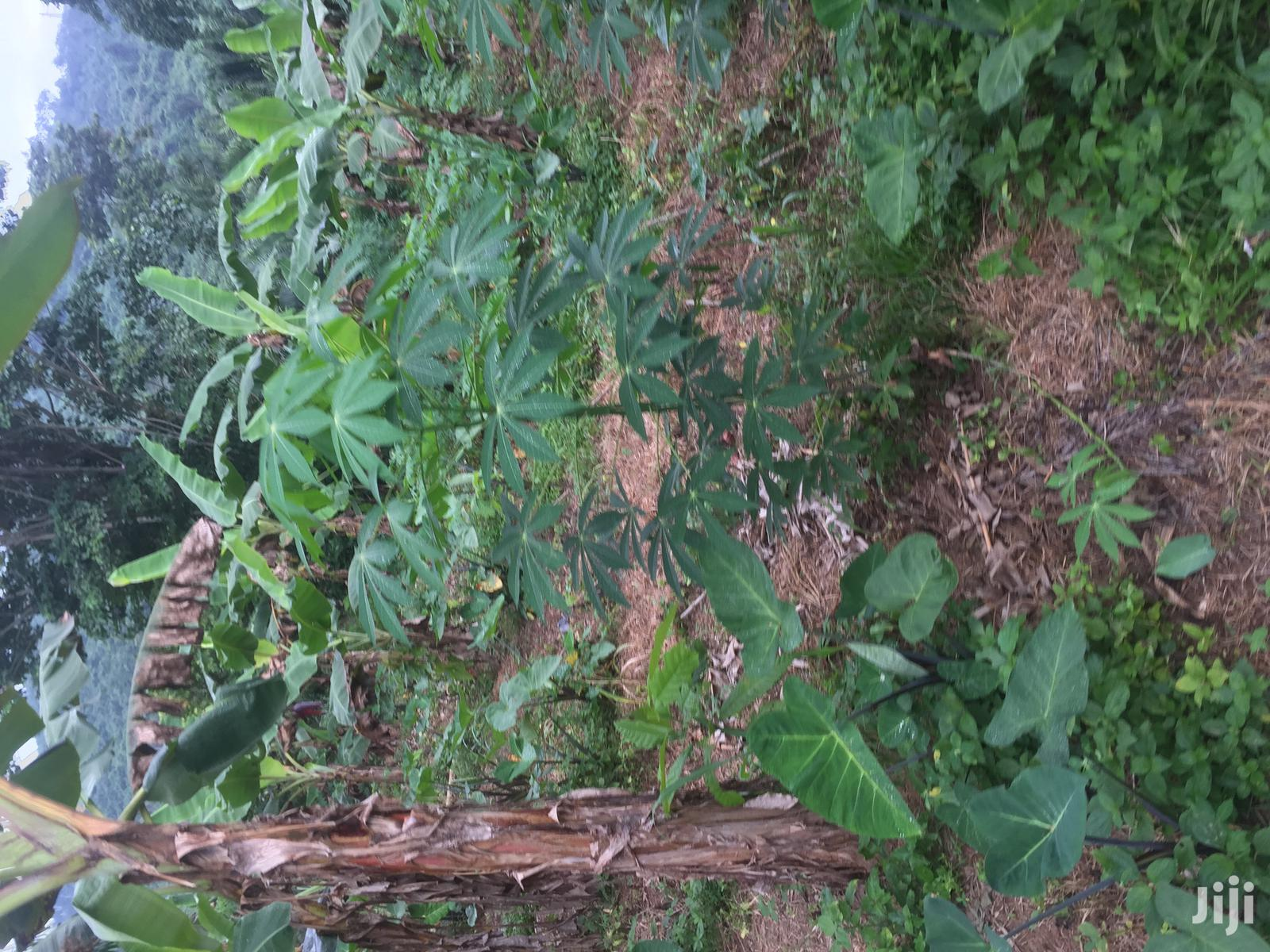 Archive: Acres of Farmland for Sale at Aburi Mountains