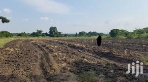 OKWENYA, SOMANYA, E/R - Fertile 10 Acres of Mango Farmland   Land & Plots For Sale for sale in Eastern Region, Yilo Krobo