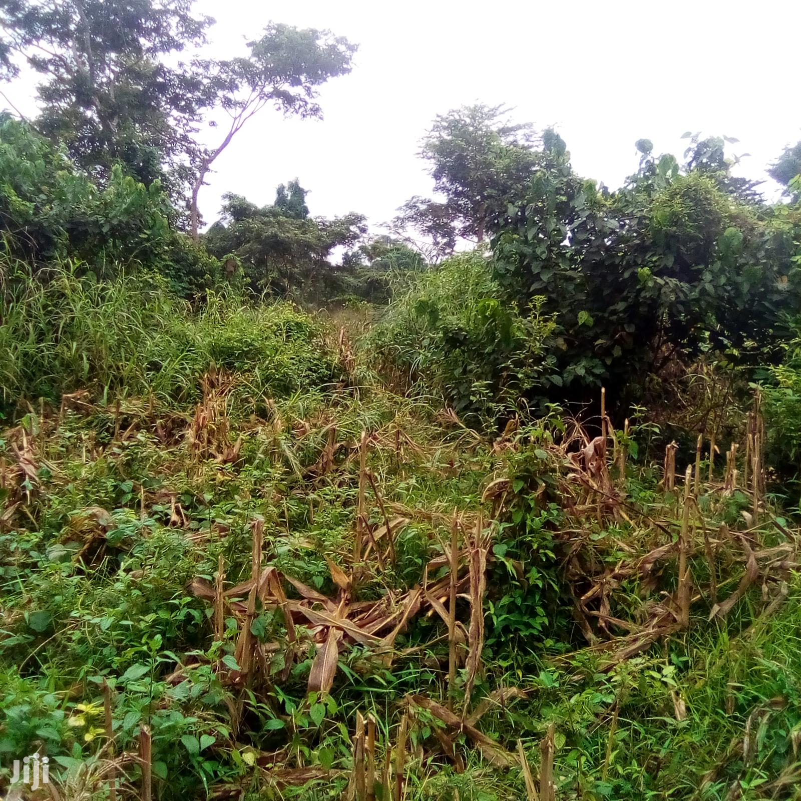 Archive: Farmland for Sale at Affordable Price.