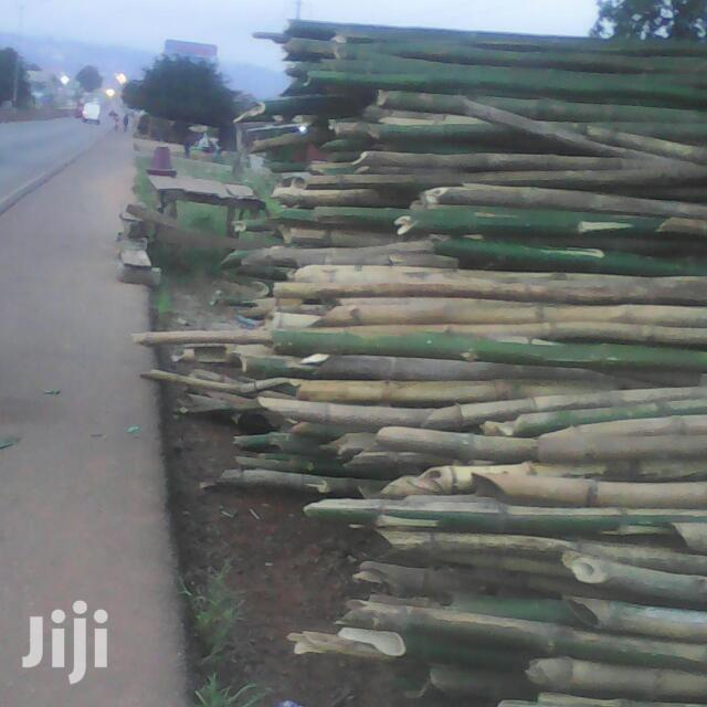 Fresh Bamboo For Sale