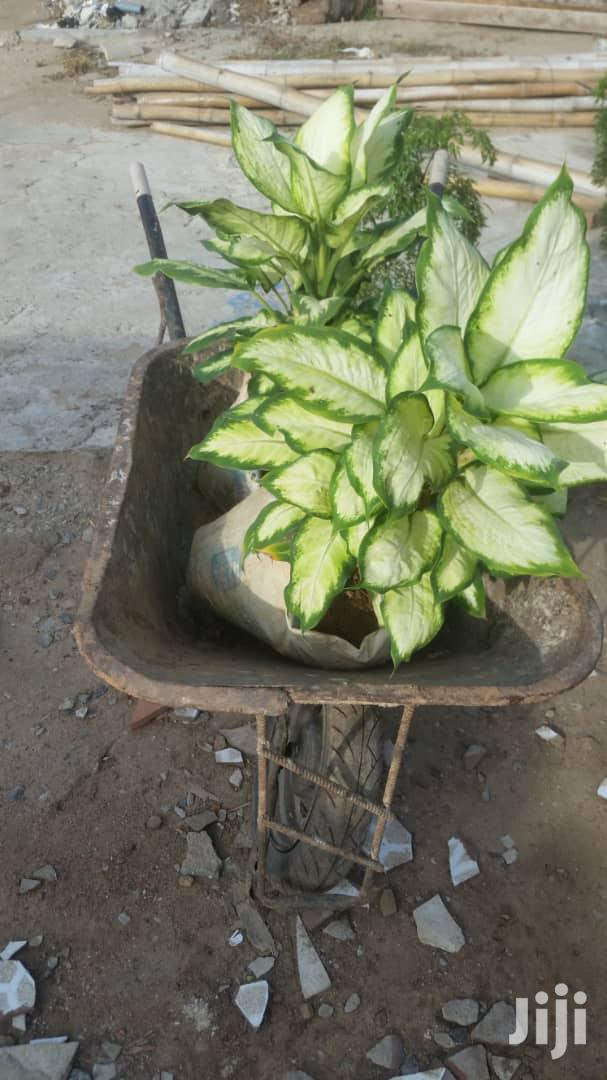Indoor Plants.( Natural)