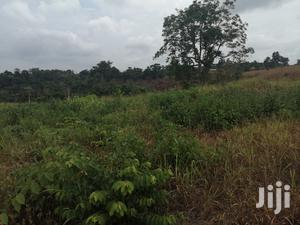 15 Acres Of Farmland At Wawasua For Sale   Land & Plots For Sale for sale in Brong Ahafo, Sunyani Municipal