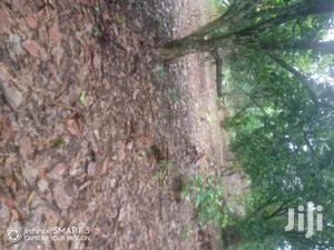 For Sale at Odumasi New Assembly | Land & Plots For Sale for sale in Brong Ahafo, Sunyani Municipal