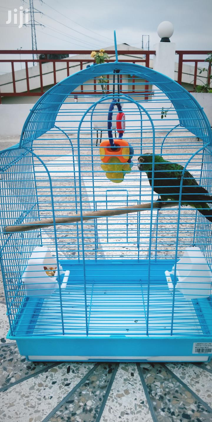 Parrot And Cage | Birds for sale in Dansoman, Greater Accra, Ghana