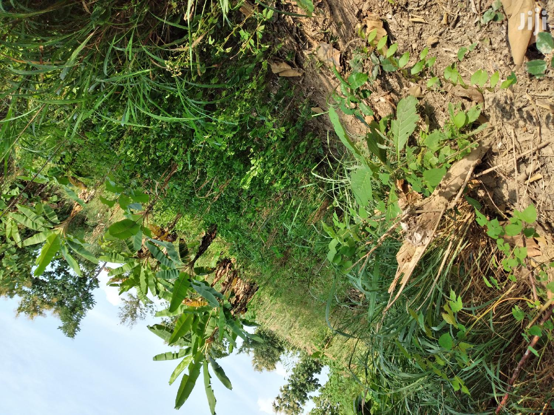 Building Plot | Land & Plots For Sale for sale in Sunyani Municipal, Brong Ahafo, Ghana