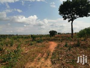 45 Acres Farmland With Cashew @ Ayakomaso. GH¢7,500 / ACRE   Land & Plots For Sale for sale in Brong Ahafo, Sunyani Municipal