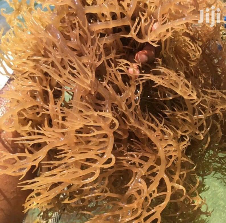 Organic Sea Moss | Feeds, Supplements & Seeds for sale in Accra Metropolitan, Greater Accra, Ghana