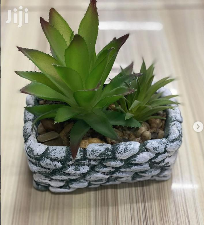 Beautiful Potted Plant