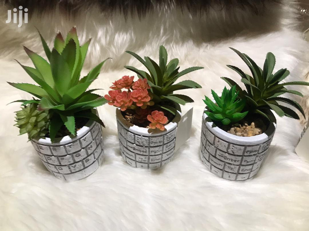 Artificail Cactus Plant   Garden for sale in East Legon, Greater Accra, Ghana