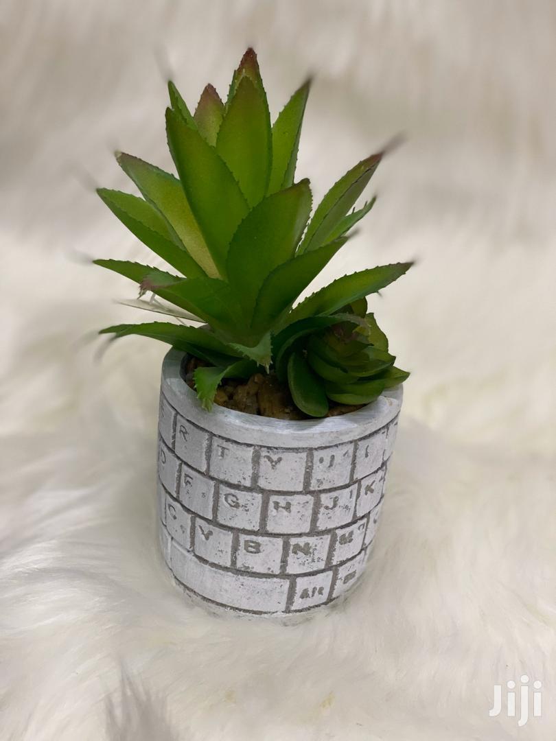 Artificail Cactus Plant