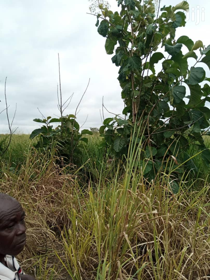 45 Acres Farmland For Sale After Odumasi | Land & Plots For Sale for sale in Sunyani Municipal, Brong Ahafo, Ghana