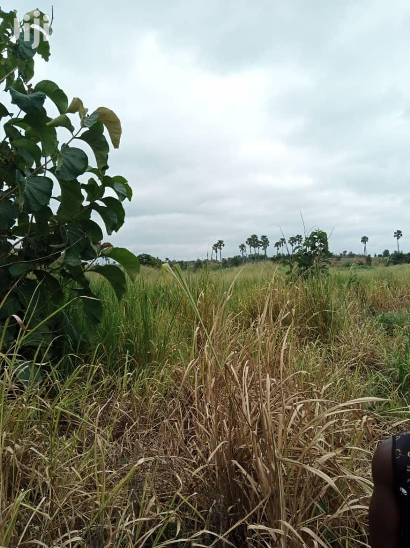 45 Acres Farmland For Sale After Odumasi