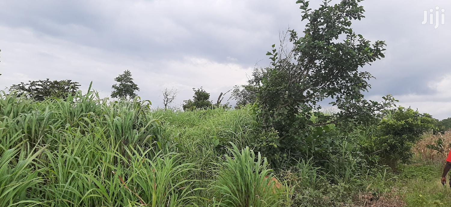 20acres Of Farmland For Sale At Wenchi Nsawkaw