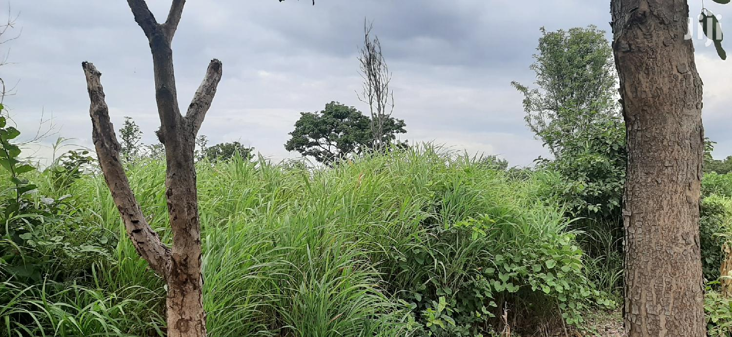 20acres Of Farmland For Sale At Wenchi Nsawkaw | Land & Plots For Sale for sale in Tain, Brong Ahafo, Ghana