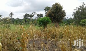 Farmlands,Residential Lands and Cocoa Farmlands   Land & Plots For Sale for sale in Eastern Region, Suhum/Kraboa/Coaltar