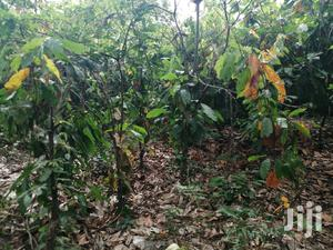 30 Acres of Farmland With Orange, Cocoa, Etc at Kantro # 2   Land & Plots For Sale for sale in Brong Ahafo, Sunyani Municipal
