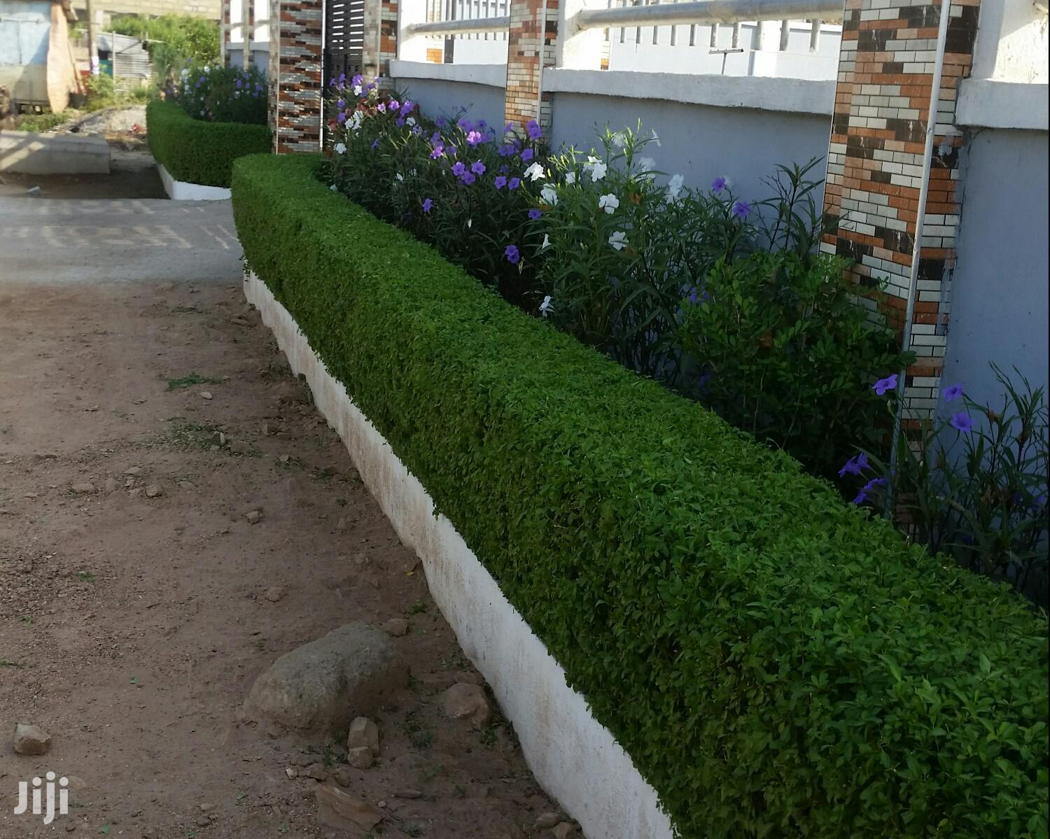 Hedges Plants | Garden for sale in Ga South Municipal, Greater Accra, Ghana
