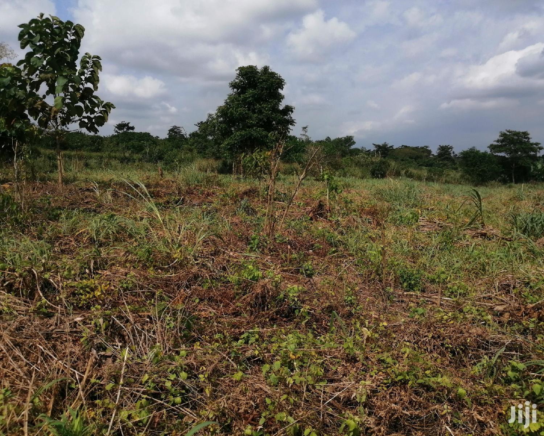 15,000 Acres of Farmland for Lease at Nkoranza
