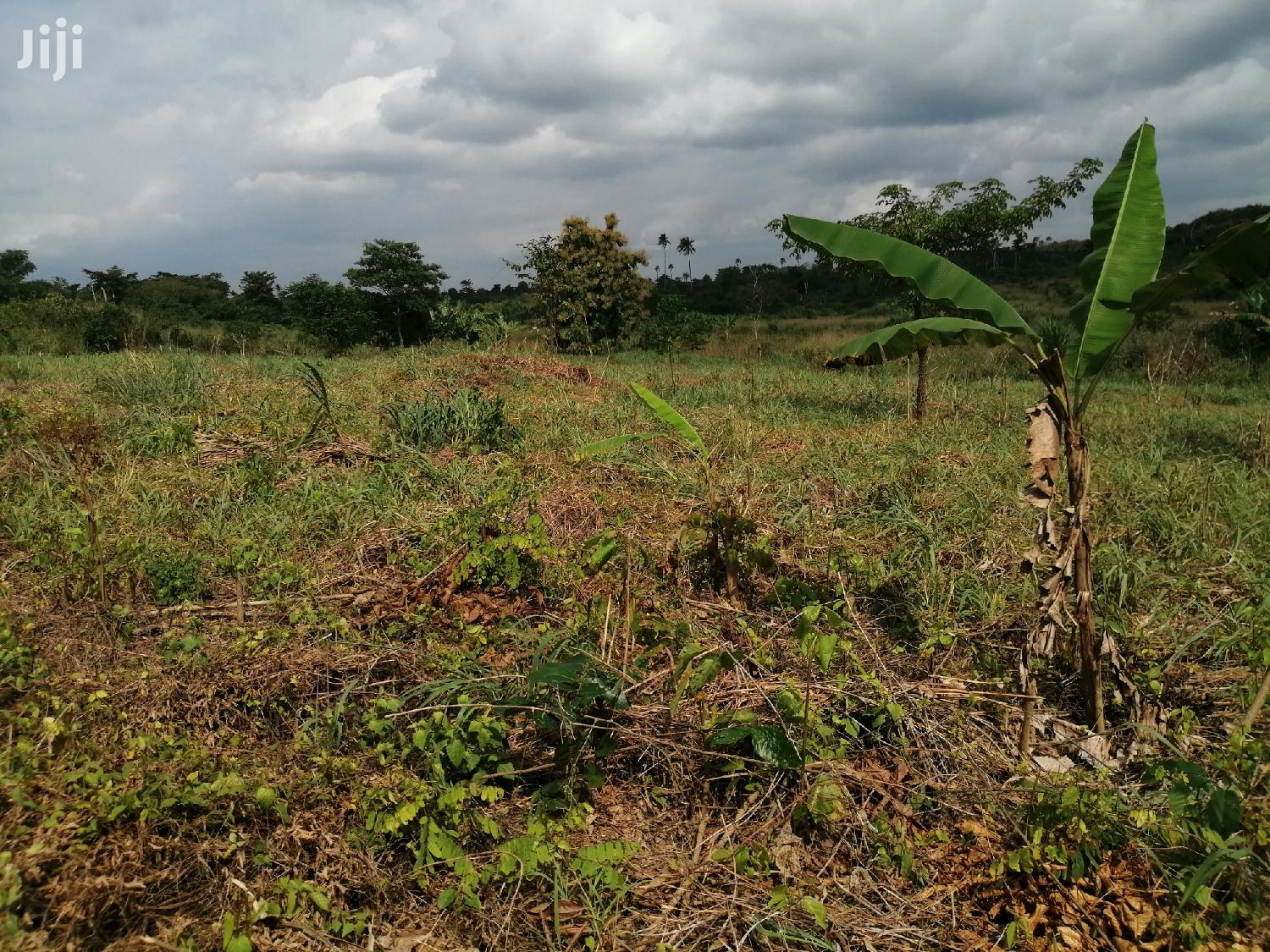 15,000 Acres of Farmland for Lease at Nkoranza   Land & Plots for Rent for sale in Nkoranza North, Brong Ahafo, Ghana